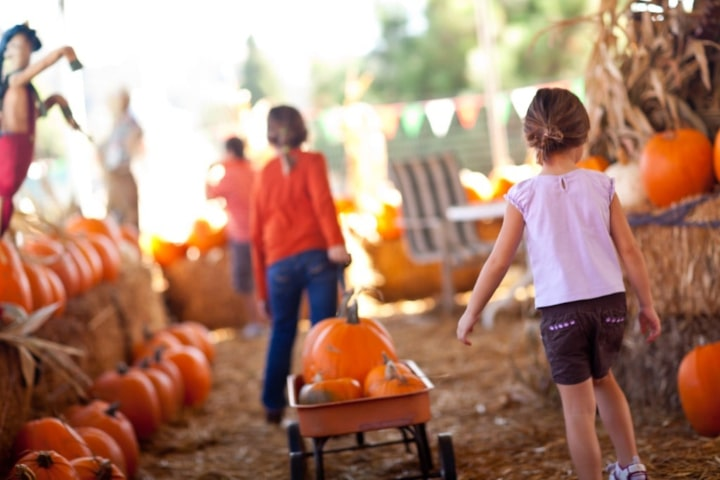 Pick your own pumpkin to take home